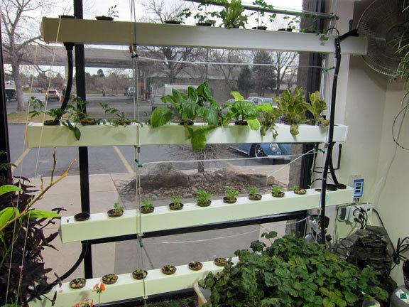 How to Open a Hydroponic Store