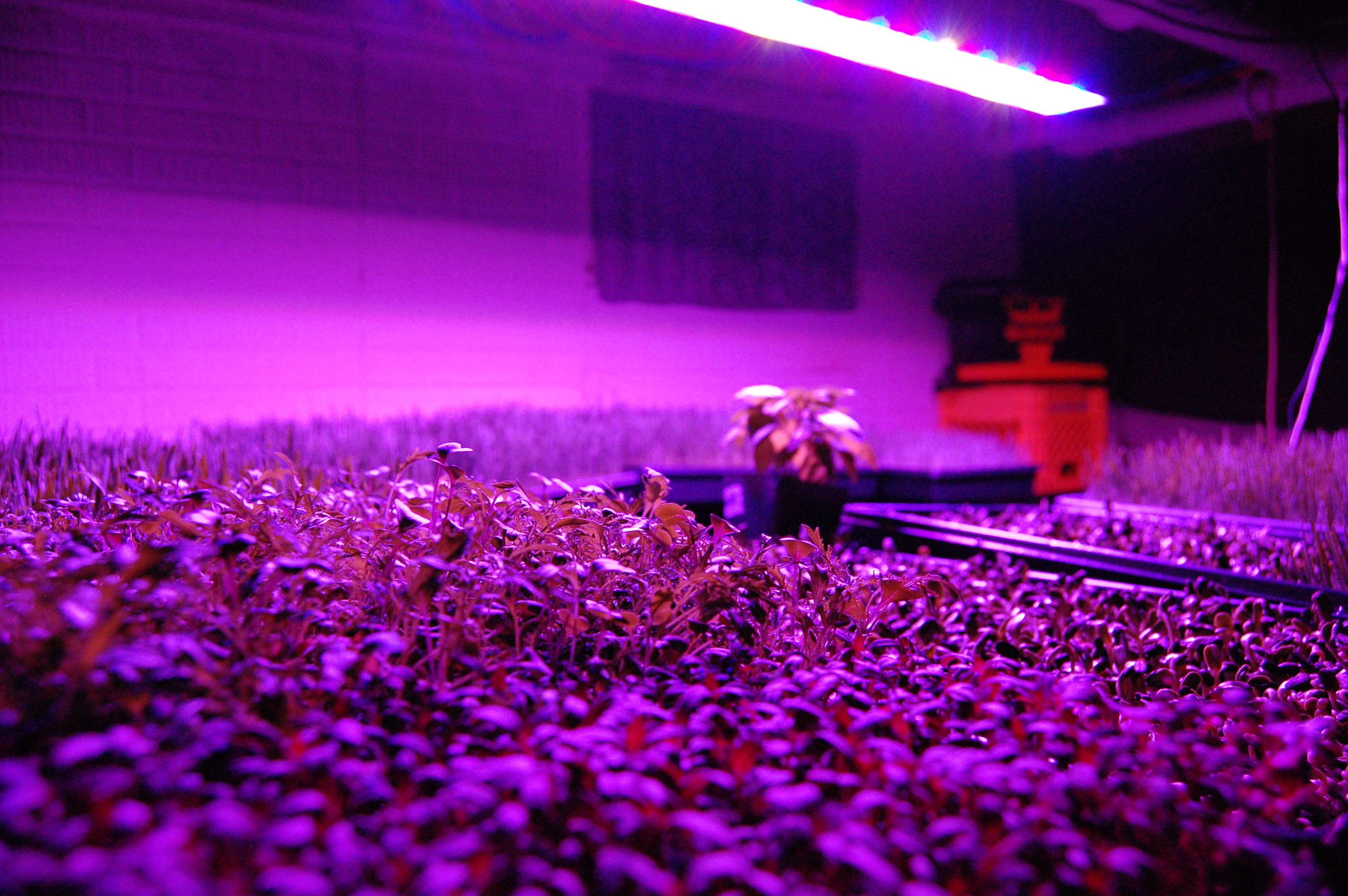 Led Vs Hid Hydroponic Grow Shops Amp Garden Centers