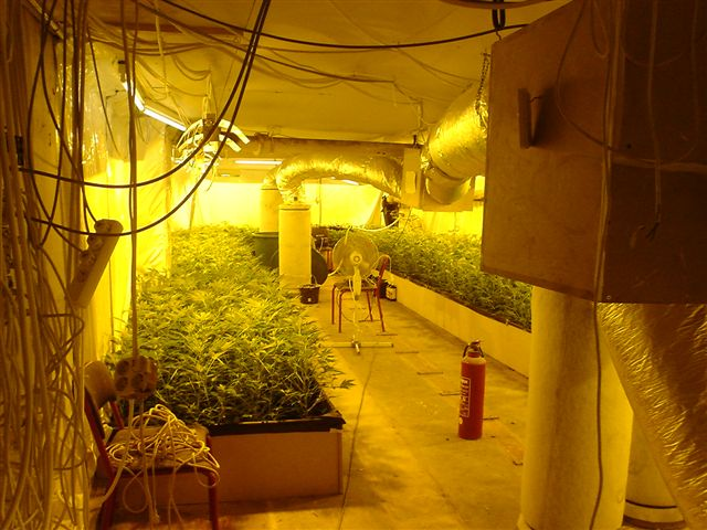 Indoor Growing Room Designs