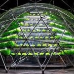 Hydroponic: It Will Save Your Garden and The World