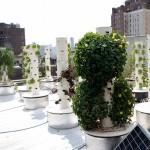Rooftop-Hydroponic-Garden-9