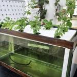 hydroponics-at-home