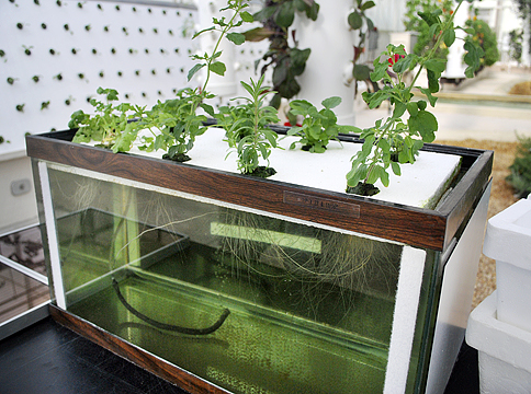 Exceptional Hydroponics At Home Nice Design