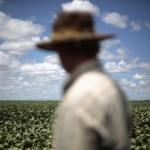 File picture of a farmer observing his soybean crops in Barreiras