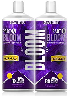 Bloom A&B
