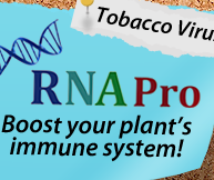 RNA Pro Tabacco Virus Fighter
