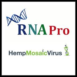 RNA Pro Hemp Mosaic Virus
