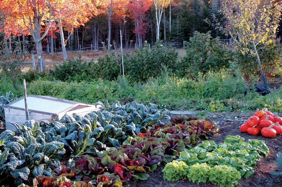 Texas Fall Vegetable Garden Best Idea